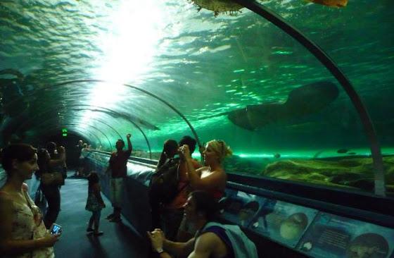 El acuario de Sydney