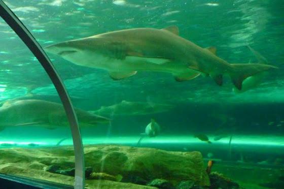 El Aquarium de Sydney en Darling Harbour