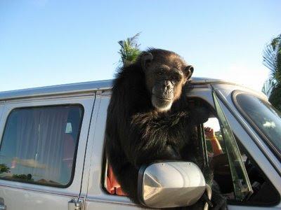 Kill All Chimps: April 2009