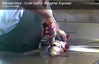 :: Fighting Against Animal Cruelty! :: Care2 Groups |Being Skinned