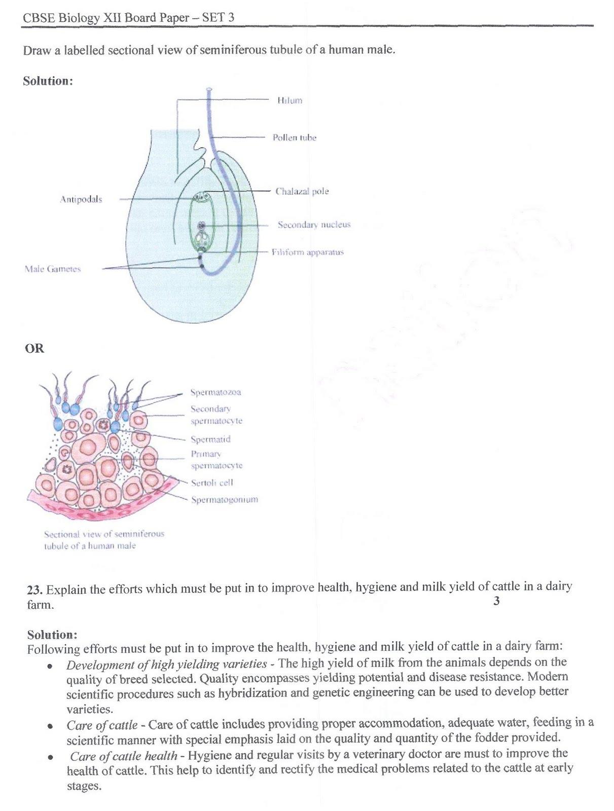 Heart Diagram Worksheet Cake Ideas And Designs