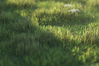 Peter Guthrie V-Ray grass tutorial image