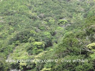 Seibu Rindoh Forest Path, Yakushima