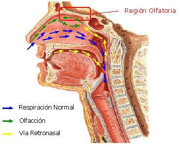 Conociendo mas sobre anatomia - 2 part 4