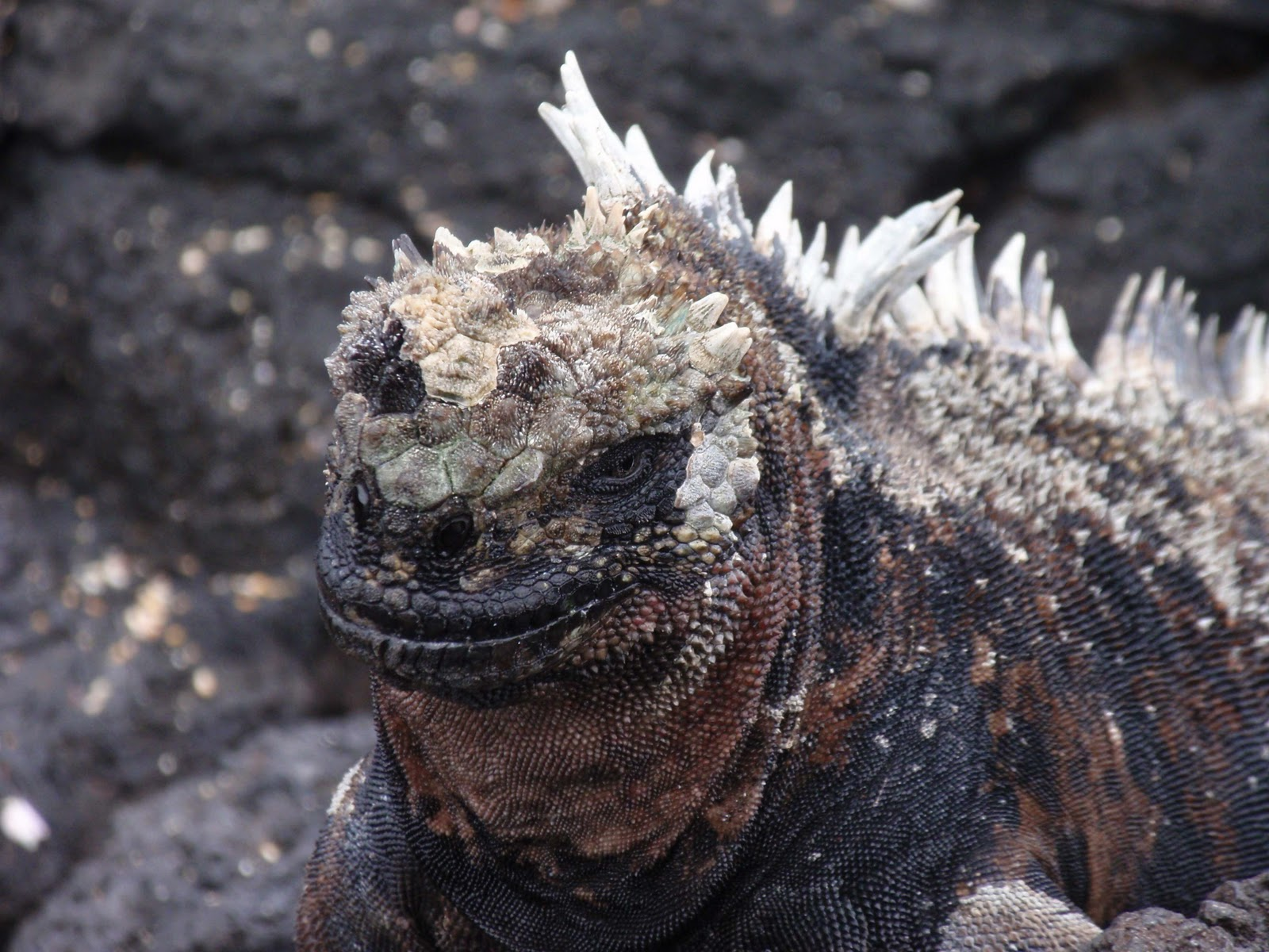 Ms. Gerharz Goes to the Galapagos: Some pictures of the ...
