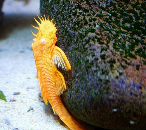 Aquarium Plants Beginners