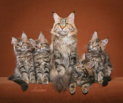 Cats et cetera from He...