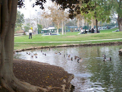 Ducks at Tewinkle Park