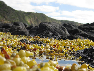A stony beach near Cape Schanck