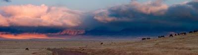 Ngorongoro Crater Panoramic