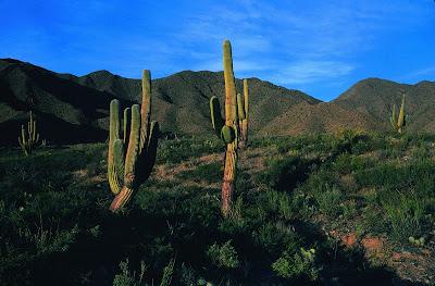 Parque Nacional Los Cardones 0