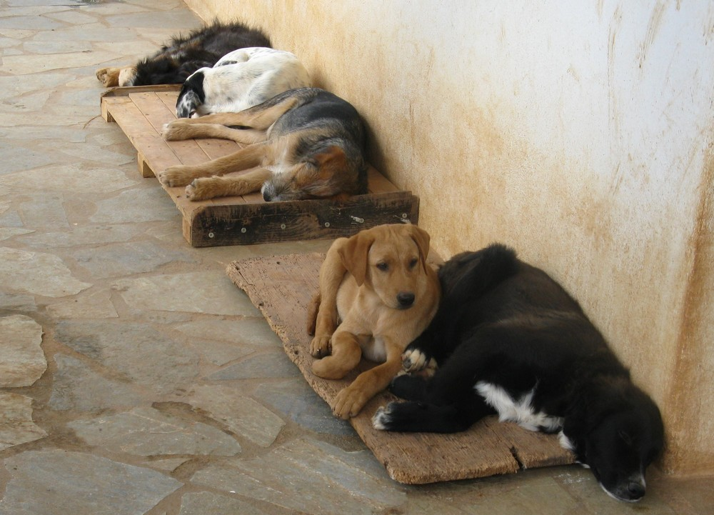 hund lefzen geschwollen