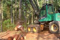 tala+arboles+ecologia+medio ambiente