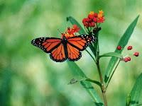 primavera+mariposa+flor