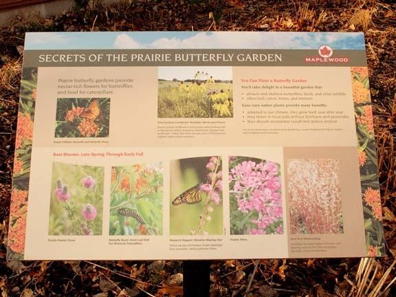 Ecobirder Monarchs and Meadow Blazing Star