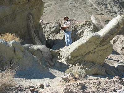 fossil dinosaurus