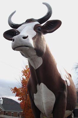 A Pennsylvania cow