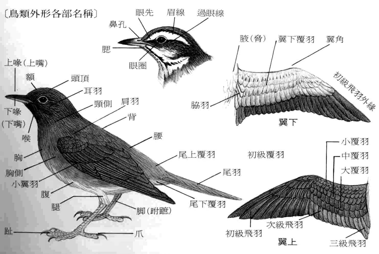Bio-serendipity: 鳥類身體構造介紹