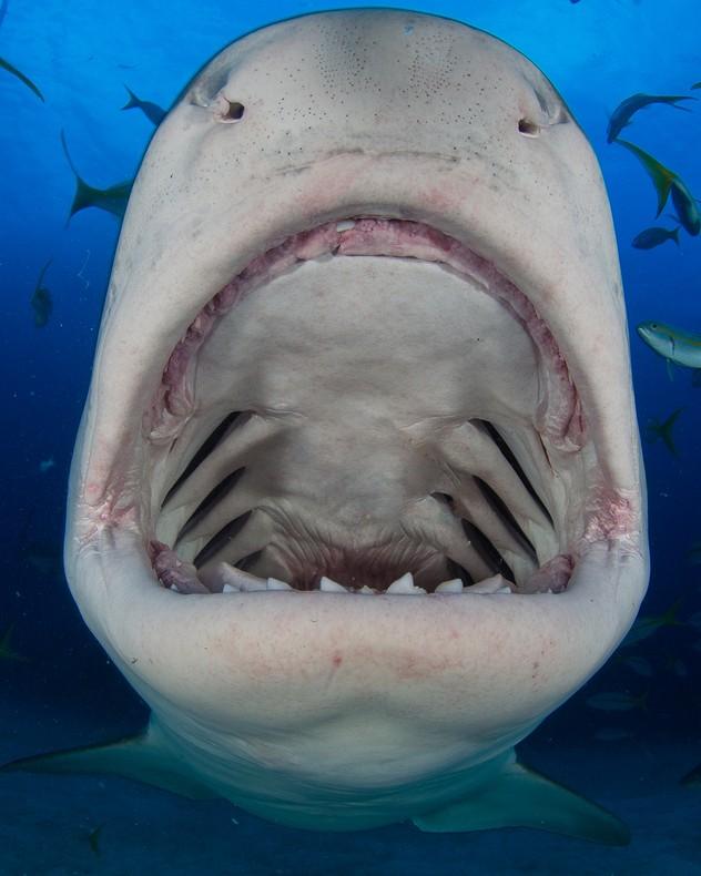 Inside A Sharks Mouth 5
