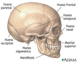 Anatomía Humana Articulaciones