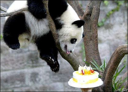 Dance Panda Dance Party Pandas