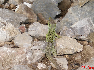 Animales en el valle del jerte