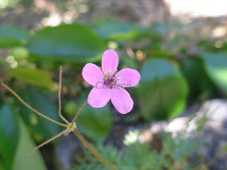 Primavera en el valle del jerte