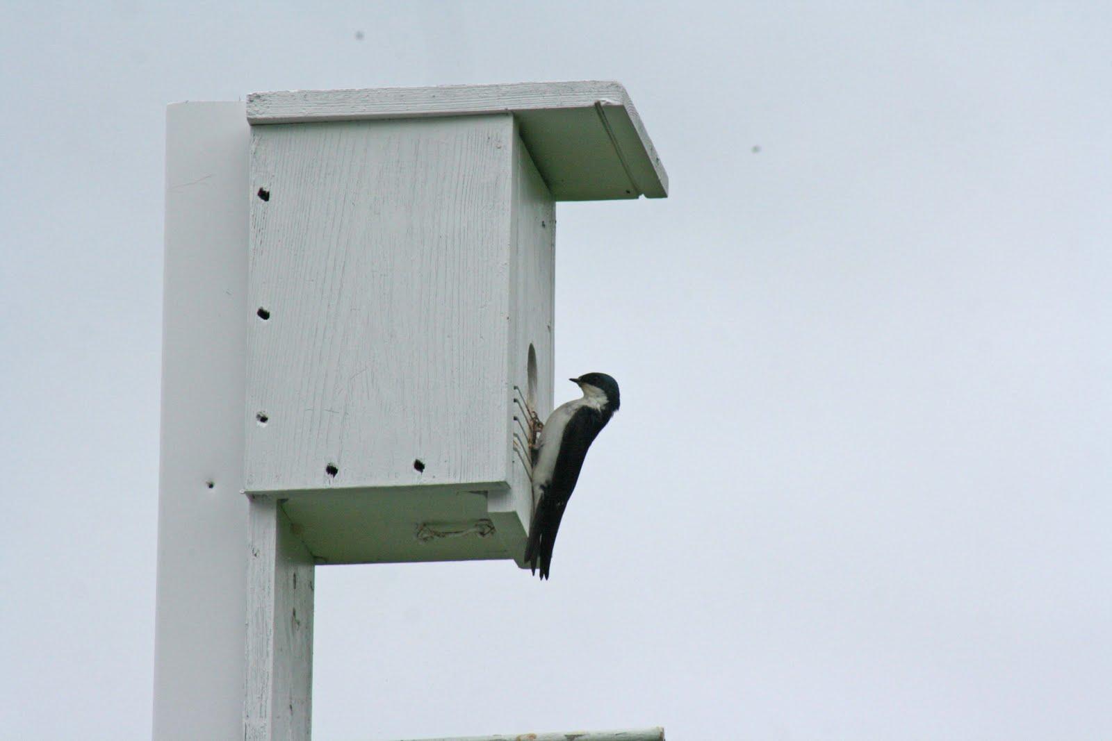 Tree Swallow Bird Houses 45