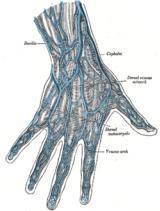 Arindam Bhadra: Fingerprint
