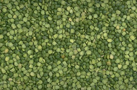Nutrition on the Cheap-Lentil Sprouts