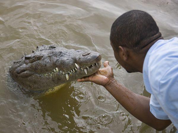 jamaican crocodile - photo #13
