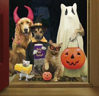 Frases Graciosas Para Halloween