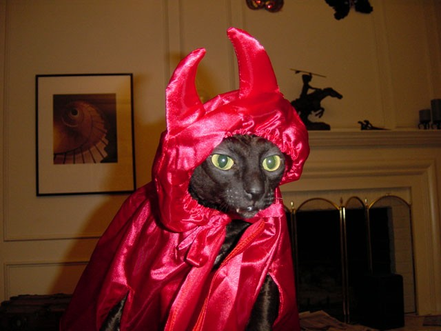 gato disfraz demonio