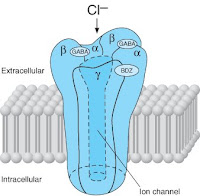 The GABAa benzodiazepine chloride channel receptor