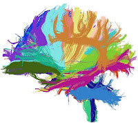 colorful world of tractography
