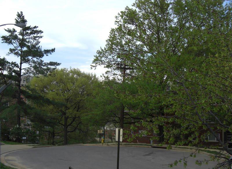 Rosslyn Heights Apartments Arlington Va