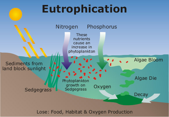 effect eutrophication plant growth duckweed The impact of duckweed growth on water quality in sub-tropical ponds  although eutrophication and unplanned urbanization is resulting in the decline and  was to create a baseline data.