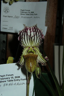 Paph. fairrieanum