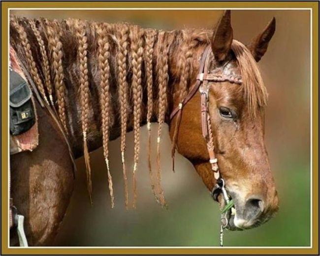 horse mane hair styles can i a pony thinking about braiding 5694 | 146821