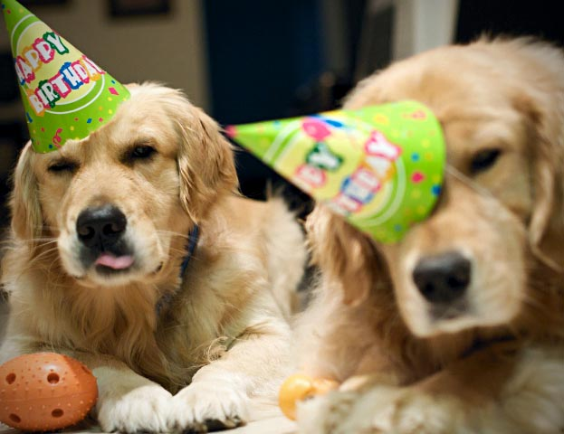 Oh And Birthday Hatsall Dogs Should Be Made To Wear Oneoh Of Course Their Friends As Wellwhat Good Sports They Are For Left Them