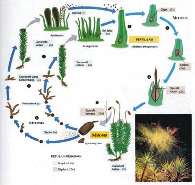 9 Contoh Teks Laporan Hasil Observasi pada Tumbuhan, Hewan, Alam dan Lingkungan Lengkap