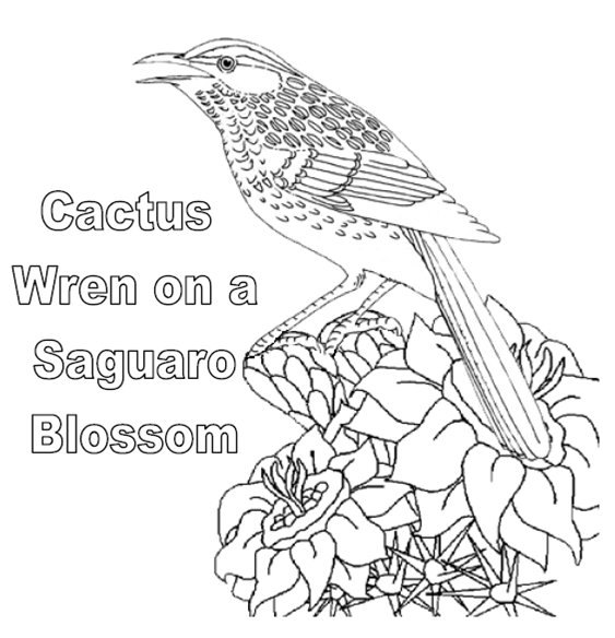 cactus wren on a saguaro blossom arizona state bird coloring page