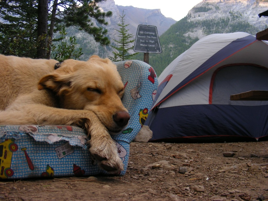 6 Tips on How to Go Camping with Her Dog