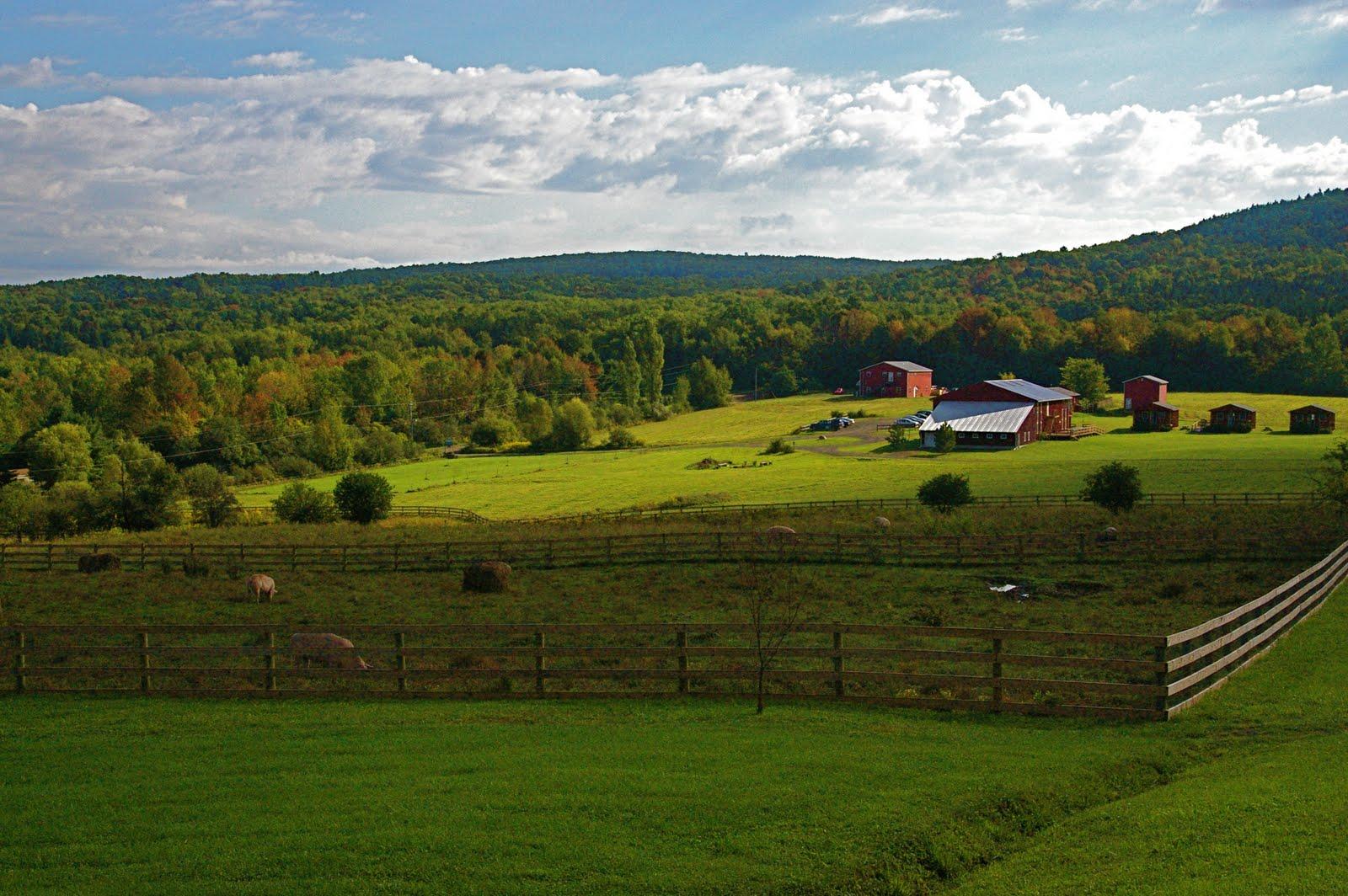 A Gift from Spotsylvania: A Beautiful Farm