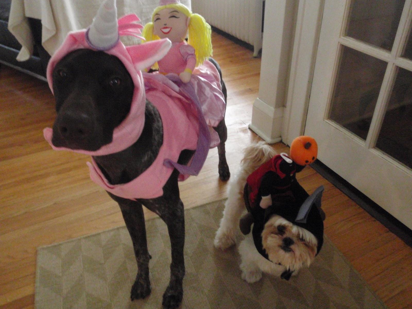 Headless Horseman Costume For Dogs