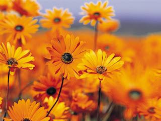 http://3.bp.blogspot.com/_zAdDesSnhH4/S2mIVKHPdvI/AAAAAAAAAJc/THfqSHtAQvY/s320/jardin_de_flores_amarillas.jpg