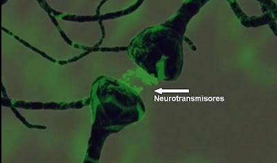 [neurotransmisores.jpg]