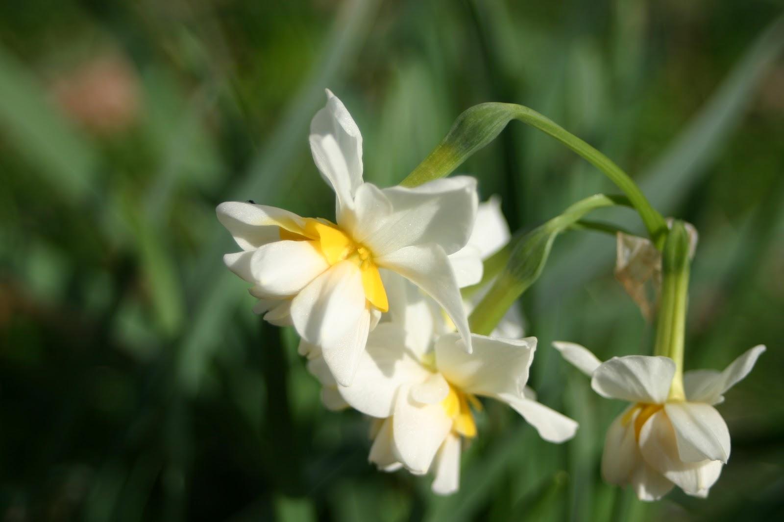 Bahçenizde çiçek açan bir asma