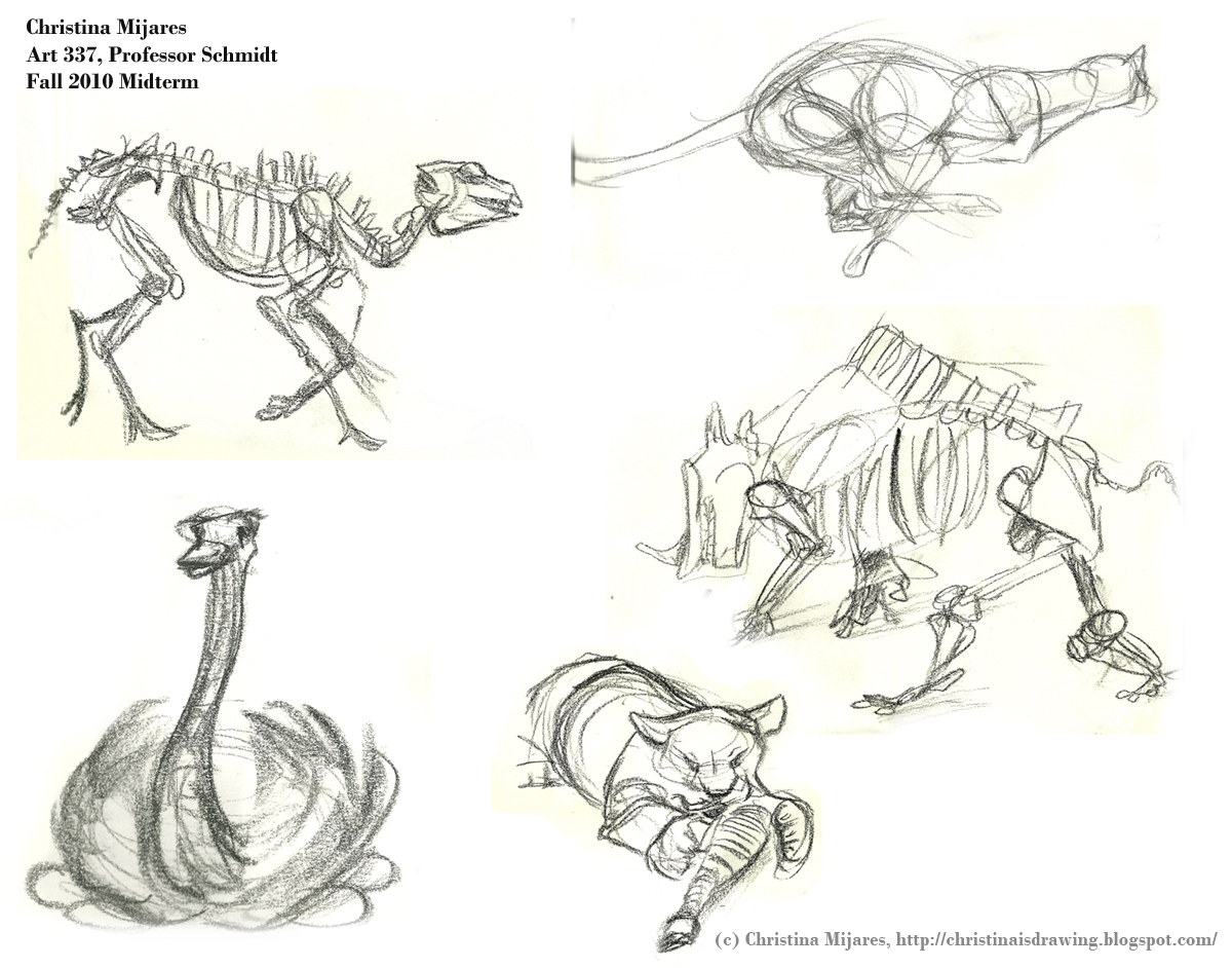 Christina's Sketchblog: Wildlife and Animal Drawing: Midterm