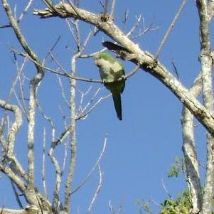 Jaytee's Quaker Parrots